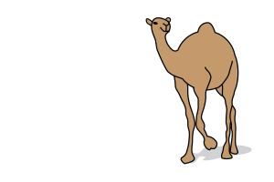 An un-undead camel