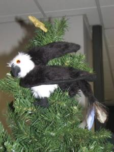 Young Nameless the Griffin makes a home for himself in our tallest tree