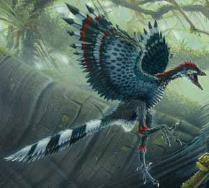 Archaeopterx the 'first bird'—a dino with feathers.